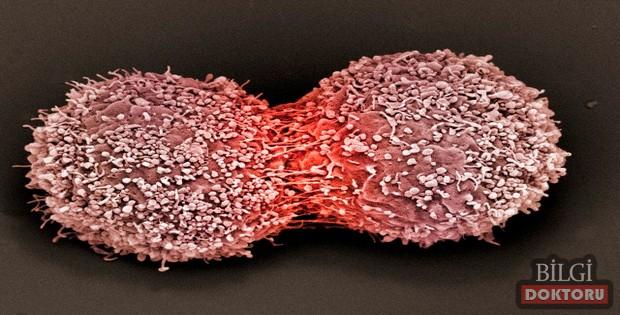 Dünya Kanser Günü