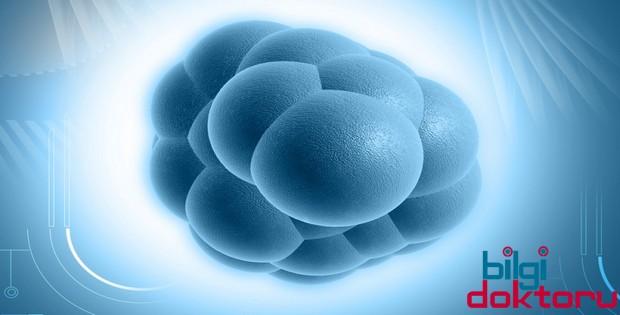Kök Hücre Estetiği Hakkında Bilgi