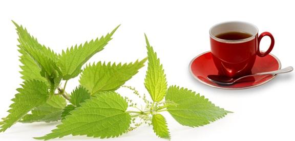 Isırgan Çayı Nasıl Yapılır