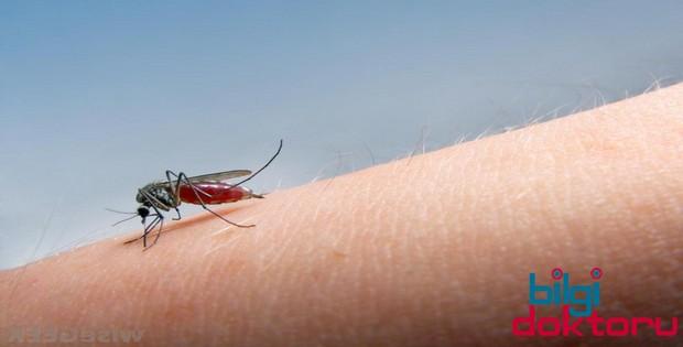 Sivrisinek-isirmasi-sonuclari