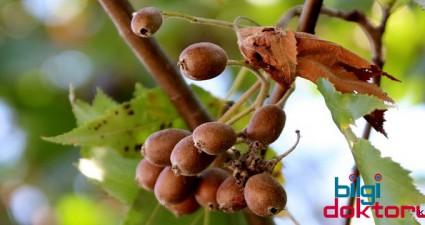 sifali-bitkiler-uvez-bitkisi