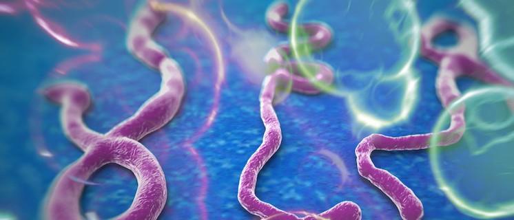Ebola-virusu-hakkinda-hersey