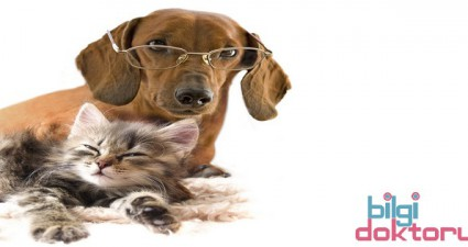 Kedi Köpekten Karaciğere Kist Geçmesi