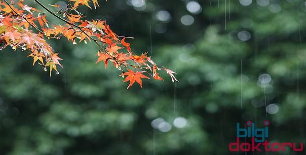 sonbahar yağmur yeşil manzara doğa