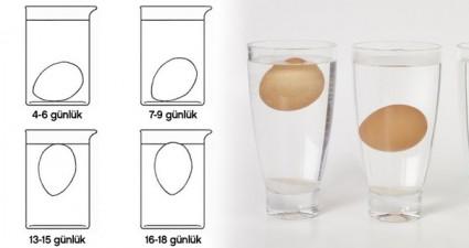 suda-yumurta-tazelik-testi