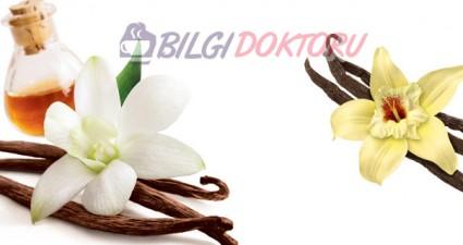 Vanilya Neye İyi Gelir? Vanilyanın Faydaları ve Kullanımı