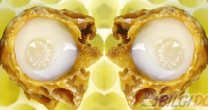 Arı Sütünün Faydaları, Arı Sütü Neye İyi Gelir?