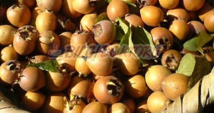 Döngel (Muşmula) Meyvesinin Faydaları