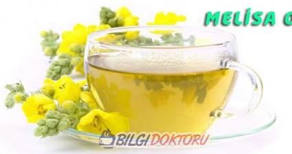 Melisa Çayı (Oğul Otu) Faydaları