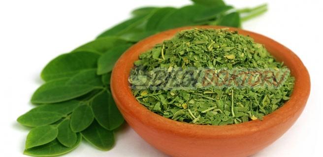 Şifalı Bitki: Moringa Oleifera Nedir? Faydaları Nelerdir?