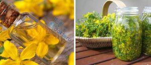 Sarı Kantaron Yağı Faydaları ve Kullanımı
