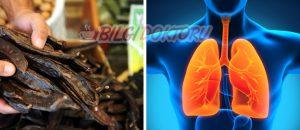 Akciğerleri Temizleyen Keçiboynuzu Kürü