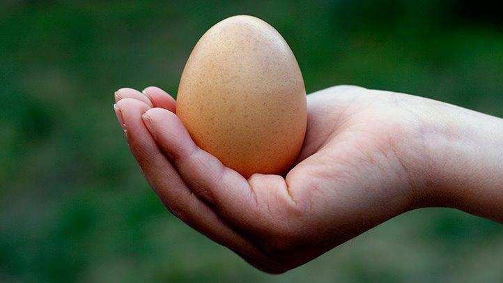 Haşlanmış Yumurta Sayesinde 2 Haftada 10 Kilo Vermek!